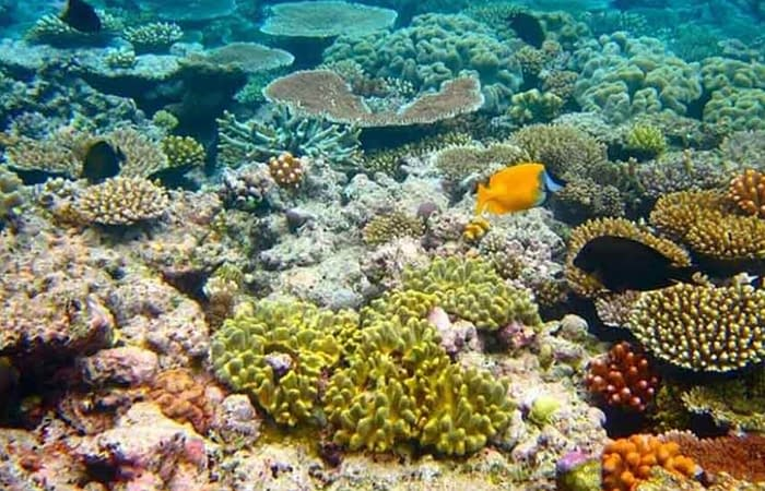 11Coral in the Red Sea