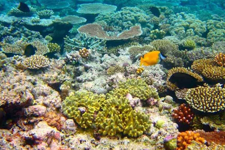 Coral in the Red Sea - Eritrea travel