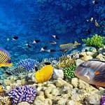 Dahlak Islands, Eritrea Red Sea