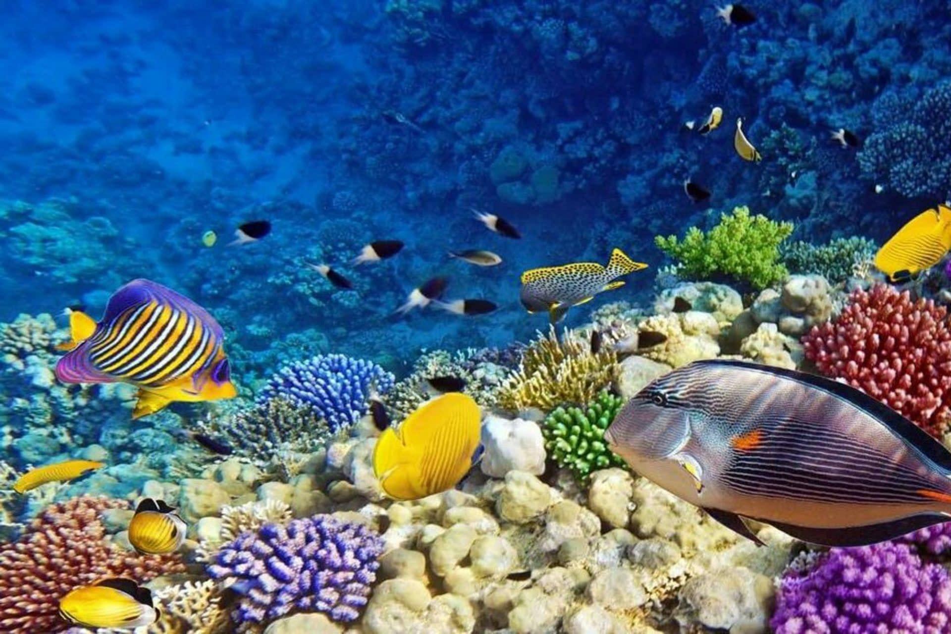 11Dahlak Islands, Eritrea Red Sea