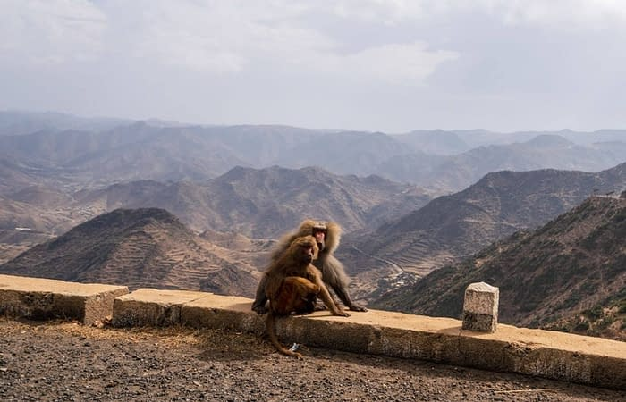 11Monkey on the way to Massawa