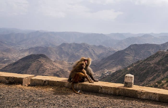 Monkey on the way to Massawa