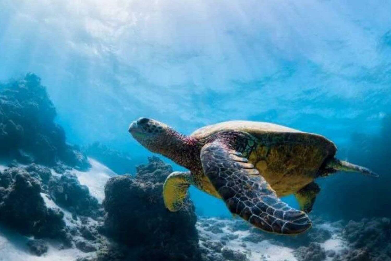 Nature in the Dahlak Archipelago